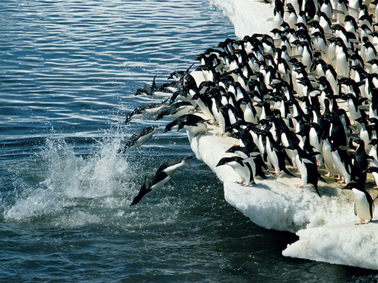 Resultado de imagem para antarctica fauna